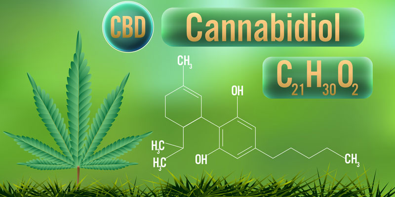cbd entourage effect and cannabidiol