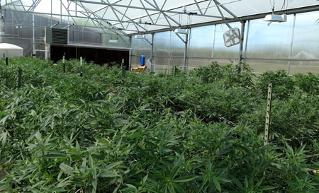 colorado hemp oil growing